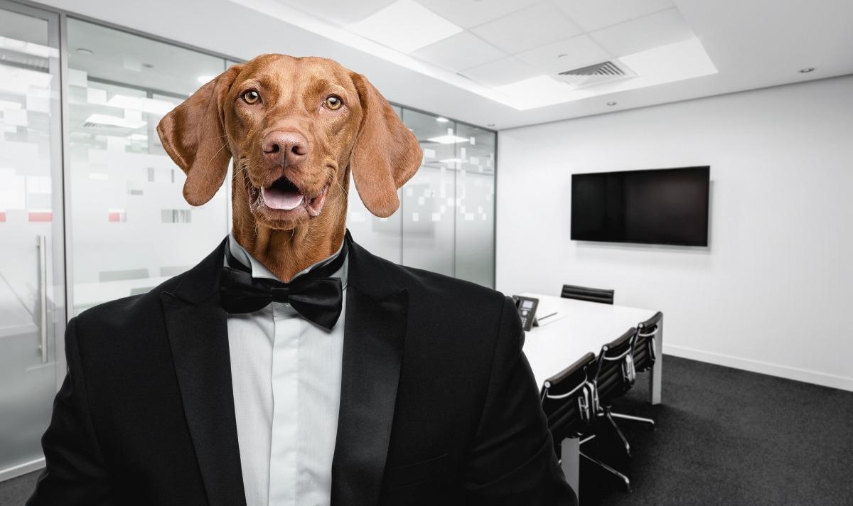 Sobre o cachorro do episódio no Carrefour e a desumanizaçãoNacional